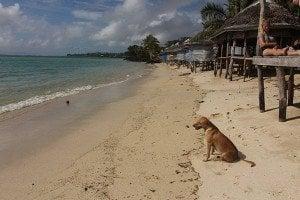 Joelan Beach Fales Lano Savaii Samoa (9)